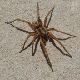 Уничтожение пауков в Каспийске
